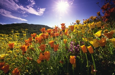 sunny summer field of flowers