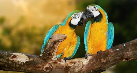 wild birds talking