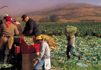 workers on an organic farm