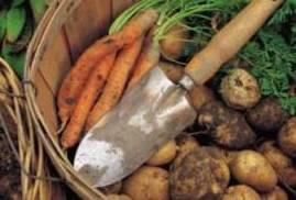 fresh vegetables from an organic garden