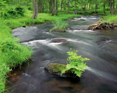 flowing river in green forest